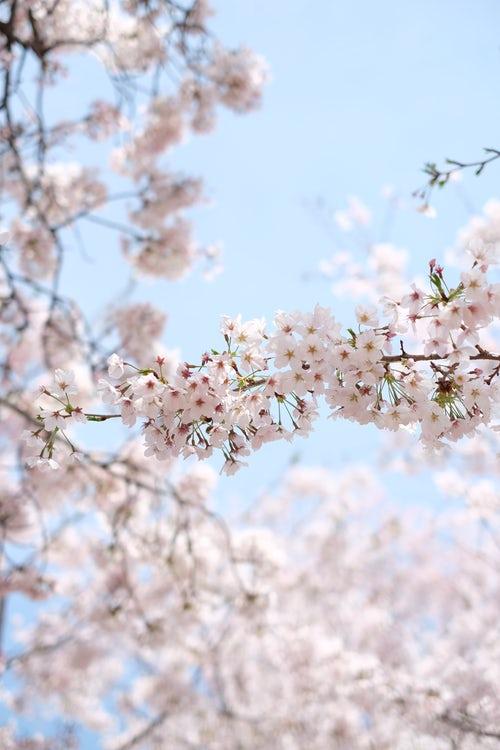 alergia polen gratinas
